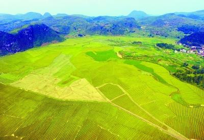 9月11日,宜章县平和乡月梅村,金黄的水稻陆续开始收割.