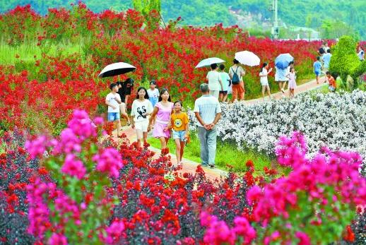 8月11日上午,临武县汾市镇玉美村紫薇主题公园,游客在绚丽的紫薇