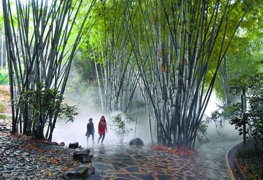 """长沙市南郊公园提质改造 宛若竹林""""仙""""境"""