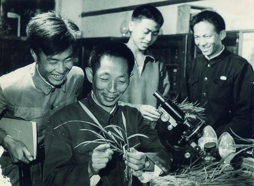 安江农校:杂交2019年六仺彩开奖结果水稻从这里起飞